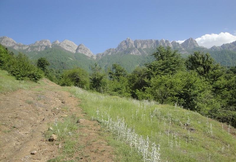 منطقه حفاظت شده بولا