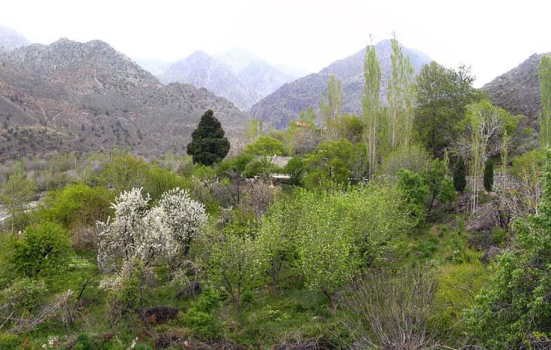 19946 روستای دلفارد