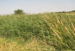 منطقه شکار ممنوع درح