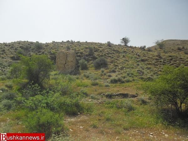 45721 روستای شلدان