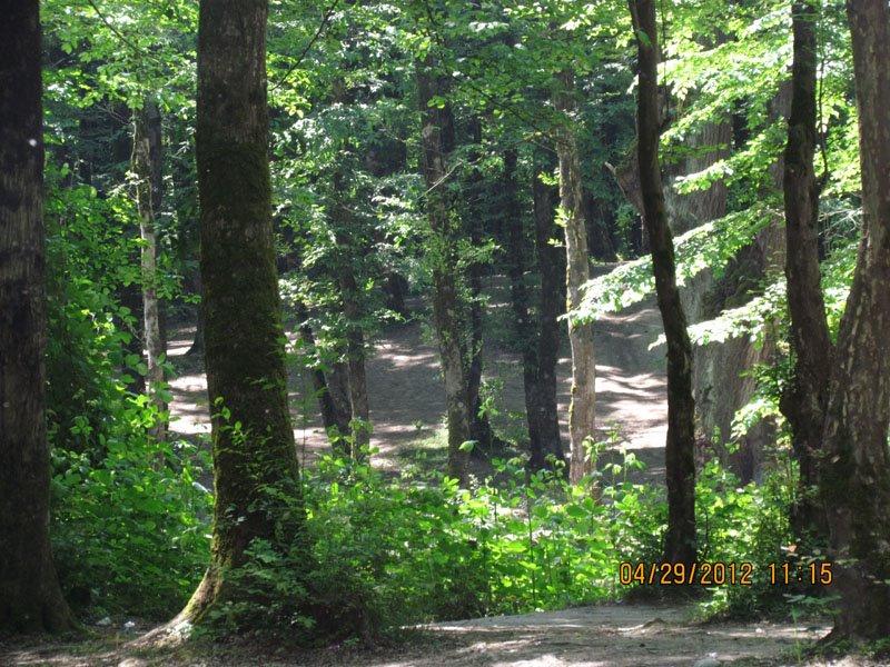 472 پارک جنگلی باغو