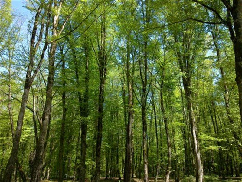 473 پارک جنگلی باغو