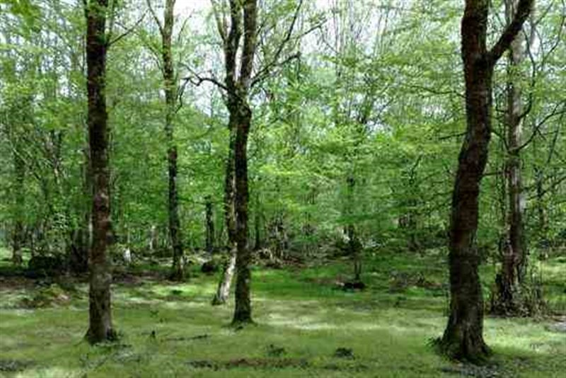 474 پارک جنگلی باغو