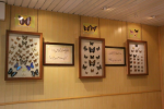 باغ موزه پروانه ها