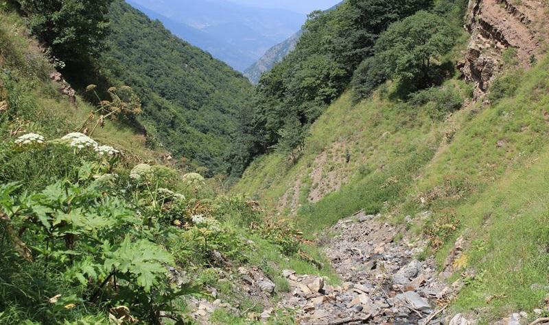 منطقه حفاظت شده چهارباغ
