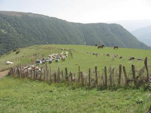 روستای پرچکوه