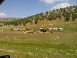 روستای مامال
