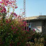روستای کوشکک