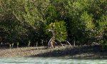 منطقه حفاظت شده حرا رود گز