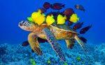 لاک پشتهای دریایی کیش