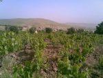 روستای سهنله