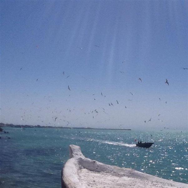 14-4-2 کافه دلفین بوشهر
