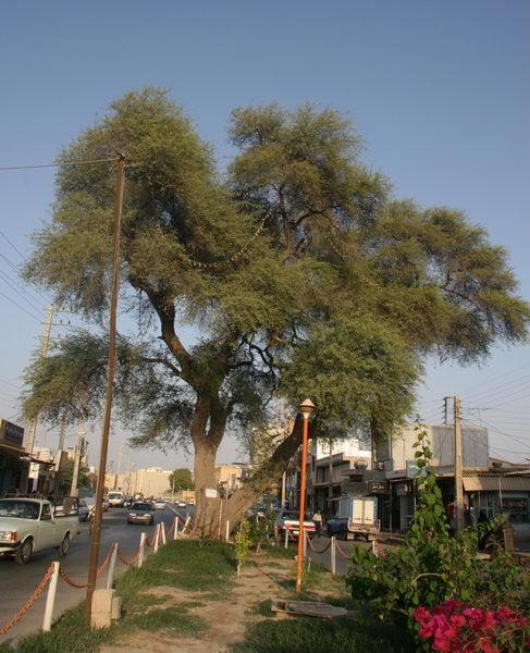 کرت کهنسال بوشهر