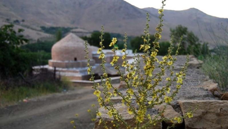 1452 امامزاده محسن مریانج