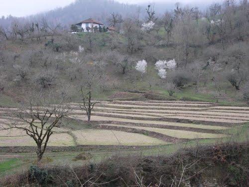 50451833 روستای جوکندان بزرگ