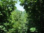 جنگل اندبیل