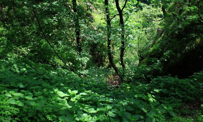 جنگل مشه