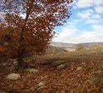 روستای بسطام