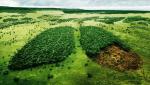 شواهدی برناکارآمدی سیستمهای حفاظت از محیطزیست کشور