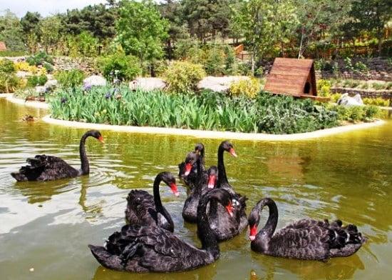 جاهای دیدنی مشهد باغ پرندگان جاهای دیدنی مشهد ،100 جاذبه گردشگری معروف
