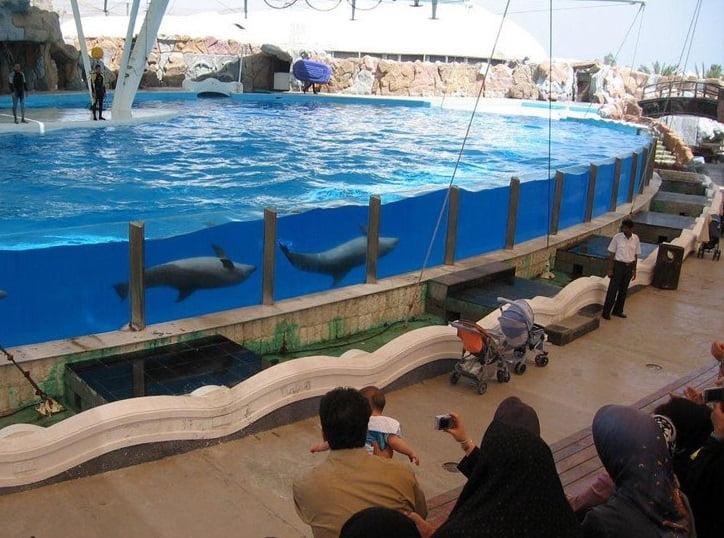 پارک دلفین های کیش