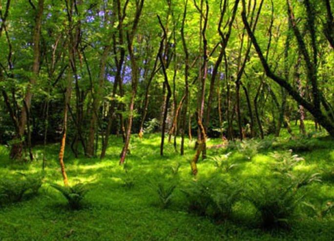 جنگلهای انجیلی سوادکوه