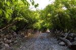 روستای شیوند