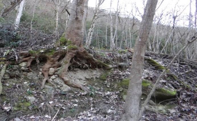 جنگل گلندرود