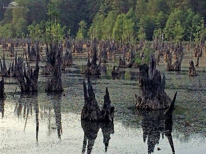 دریاچه ارواح (تالاب ممرز)