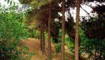 پارک جنگلی خرگوش دره تهران