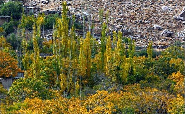 روستای منشاد
