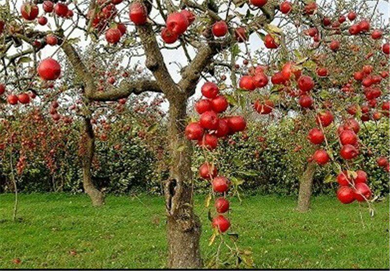 باغ سیب مهرشهر باغ سیب مهرشهر کرج