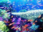 جزایر مرجانی قشم