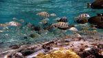 حیات وحش دریایی قشم