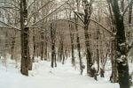 جنگل دانه