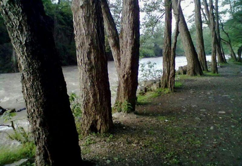 پارک جنگلی فین