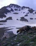 کوه خشچال