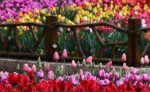 جاهای دیدنی کرج در بهار