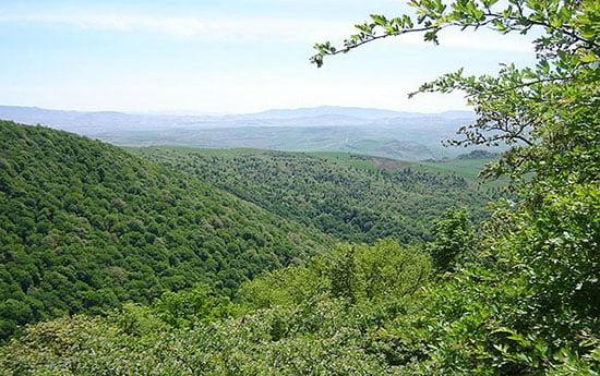 جنگل اولنگ جاهای دیدنی سمنان در بهار