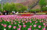 جاهای دیدنی محلات در بهار