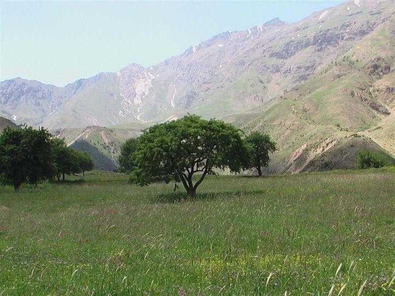 روستای انگوران زنجان  روستای انگوران زنجان