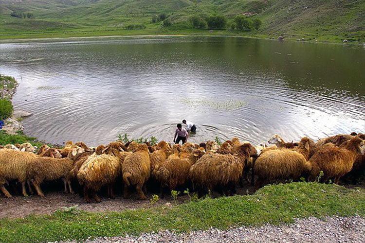 عشایر ایل شاهسون