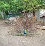 باغ پرندگان تمجیدی