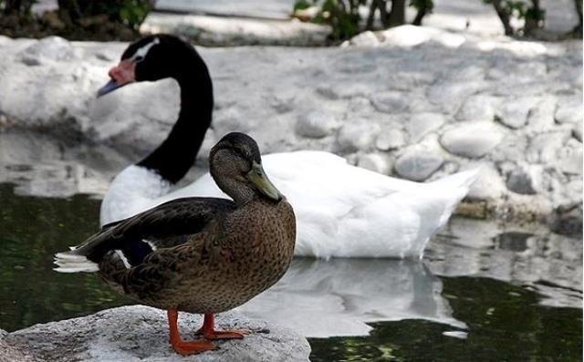 باغ پرندگان فریدونکنار