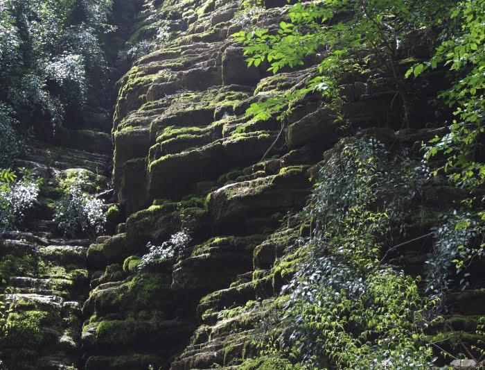 جنگل پلکانی کلاله جنگل پلکانی کلاله
