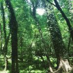 جنگل انجیلی دروازوک