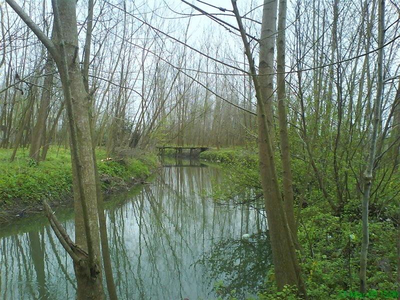 روستای تسیه خمام