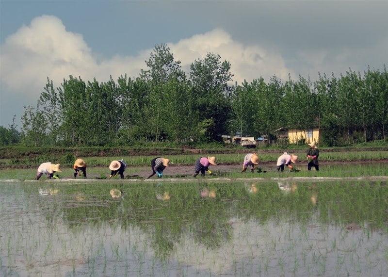 روستای چاپارخانه خمام