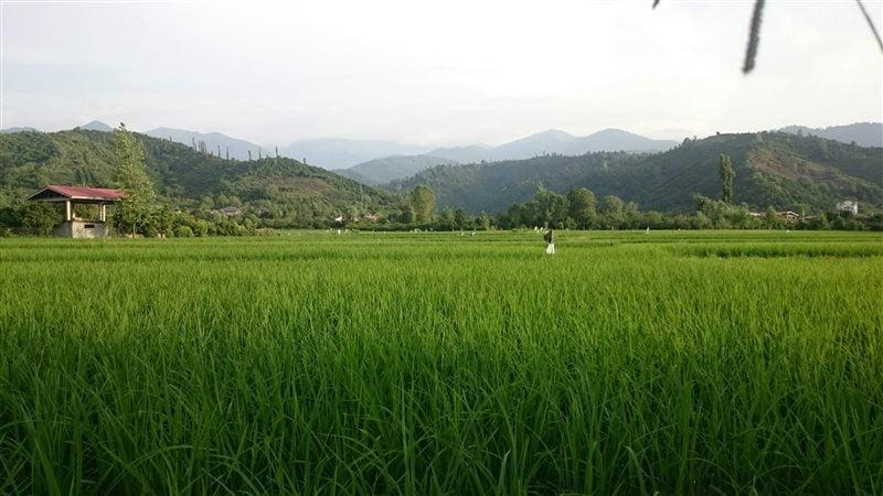 روستای گاوماست