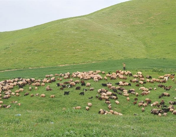 روستای گچی سو بالا